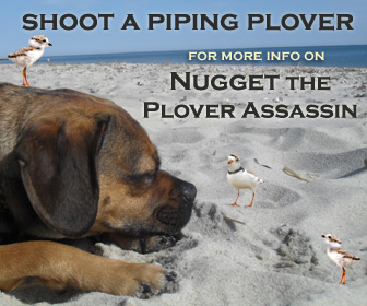 Nugget the Piping Plover Assassin